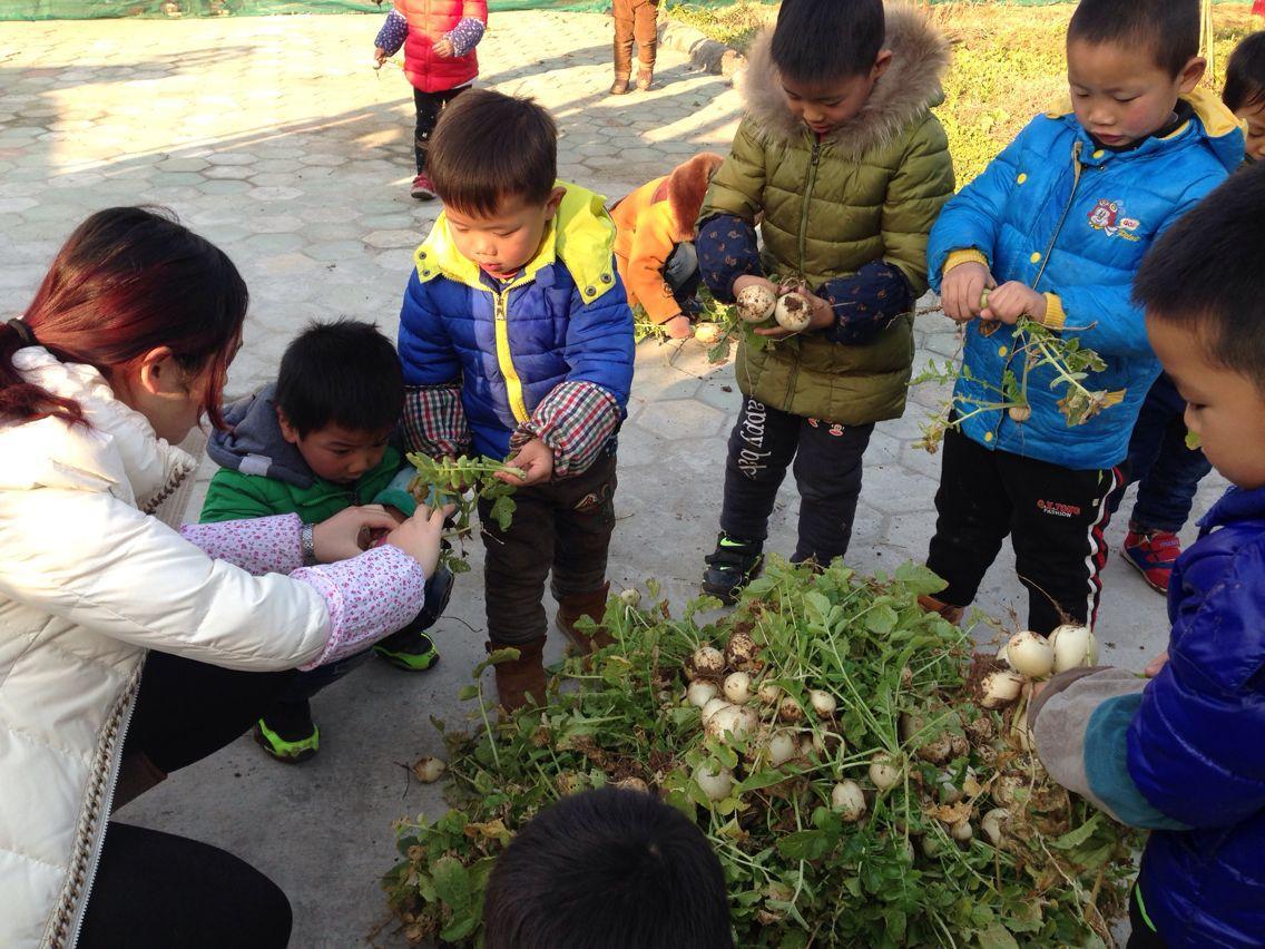 天王镇唐陵幼儿园:萝卜丰收乐       近日,天王镇唐陵幼儿园种植地